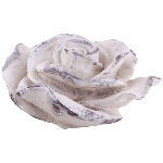 Blume Valo, creme/white, Polyresin, 16x16x9 cm