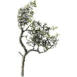 TeeBaumZweig ArtificialNature, grün, 40x25x25 cm