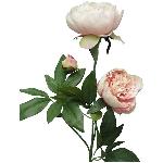 Paeonia ArtificialNature, pink 70x25x20 cm
