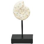 Ammonit Hilda, Polyresin, 12x8x24 cm
