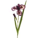 Schwertlilien ArtificialNature, braun, 95 cm