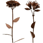 BlumenStecker Tôle, rusty, Metall, 20x20x110 cm