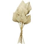 Palm King Spear Aride, natur, 100 cm